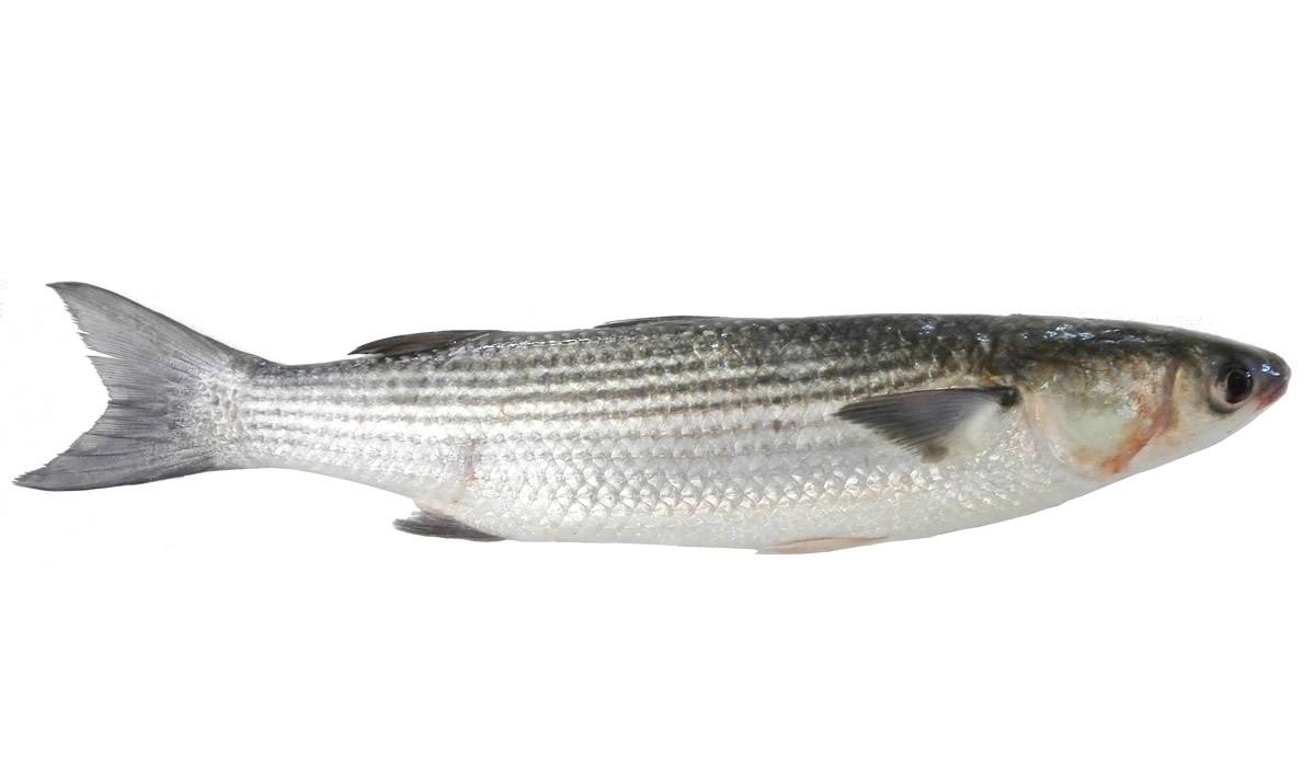 salina-calcara-trapani-fauna-cefalo-1