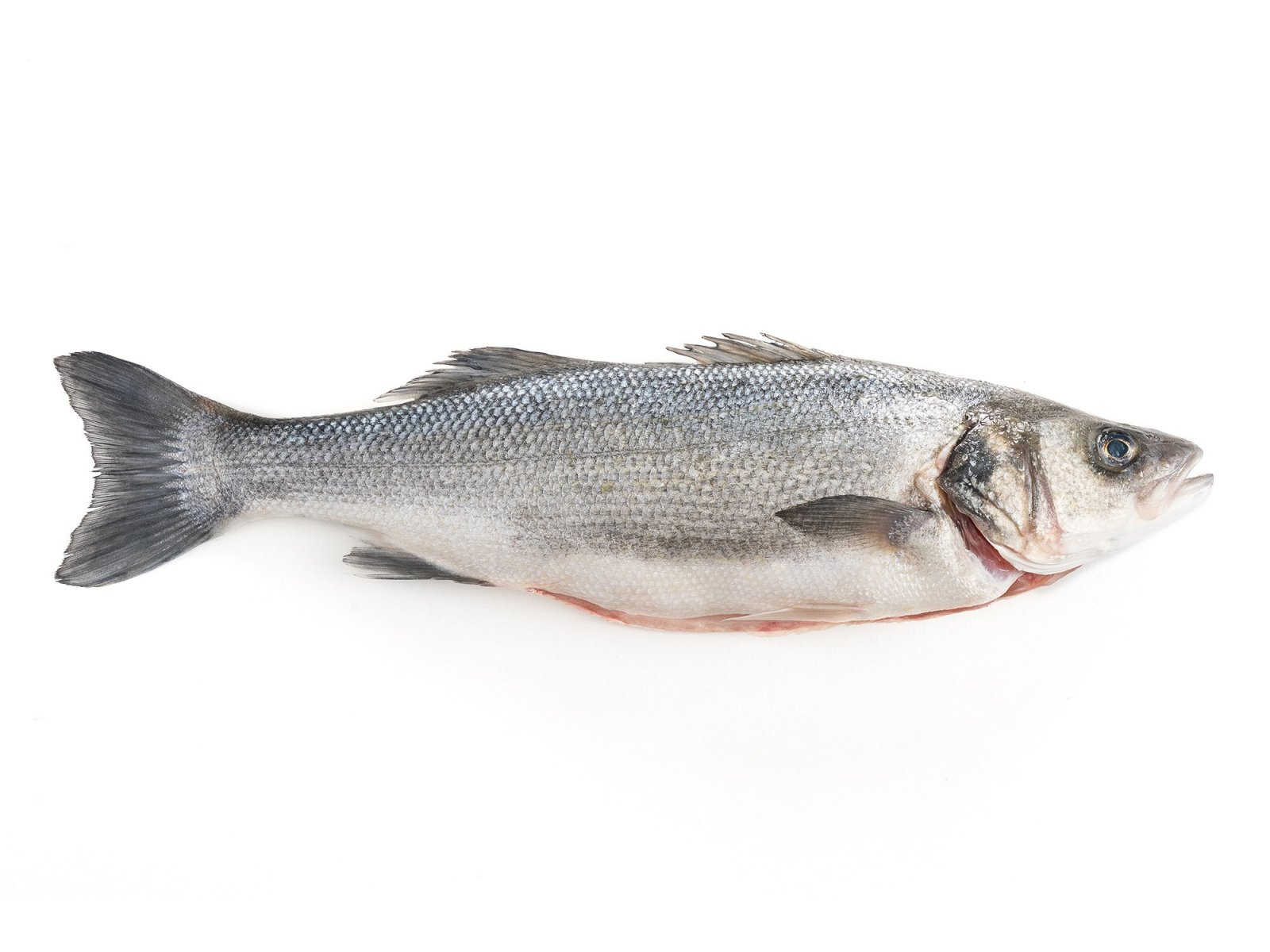 salina-calcara-trapani-fauna-spigola-1