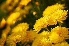 salina-calcara-trapani-flora-fior_doro