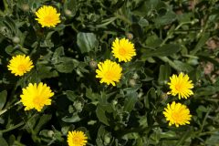 salina-calcara-trapani-flora-fiorrancio_marittimo-scaled
