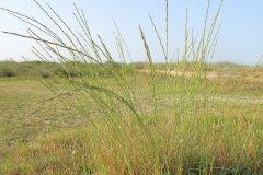 salina-calcara-trapani-flora-gramigna_spiagge-1