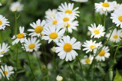 salina-calcara-trapani-flora-margherita