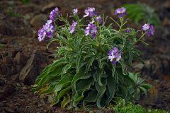 salina-calcara-trapani-flora-violaciocca_rosa-scaled