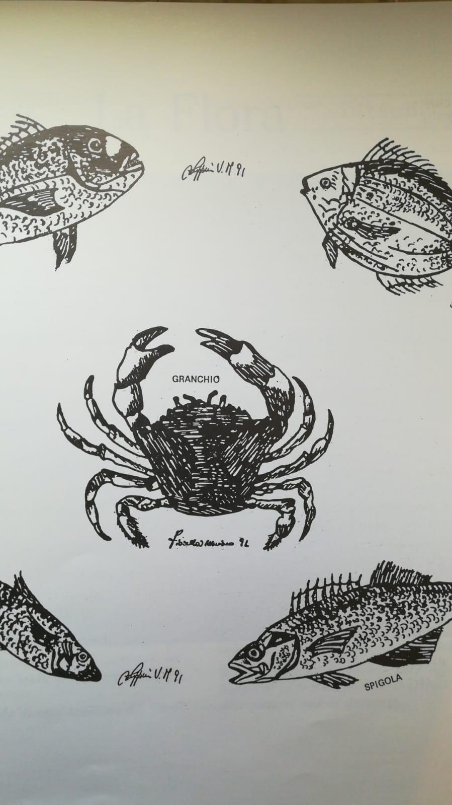 Salina Calcara di Trapani - Fauna ittica